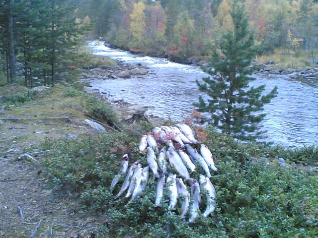 iijoki kalastus
